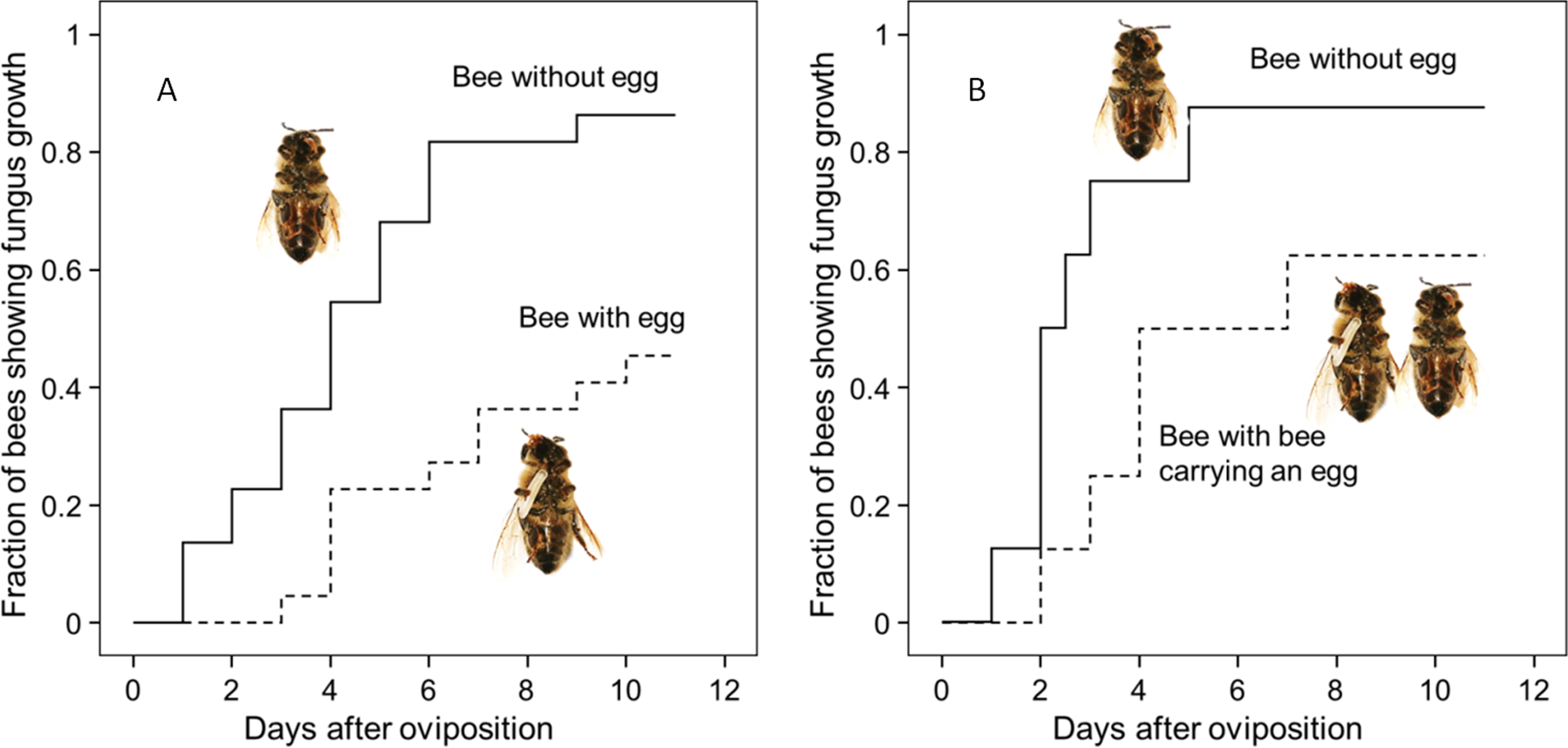Nitric Oxide Radicals Are Emitted By Wasp Eggs To Kill Mold Fungi Elife