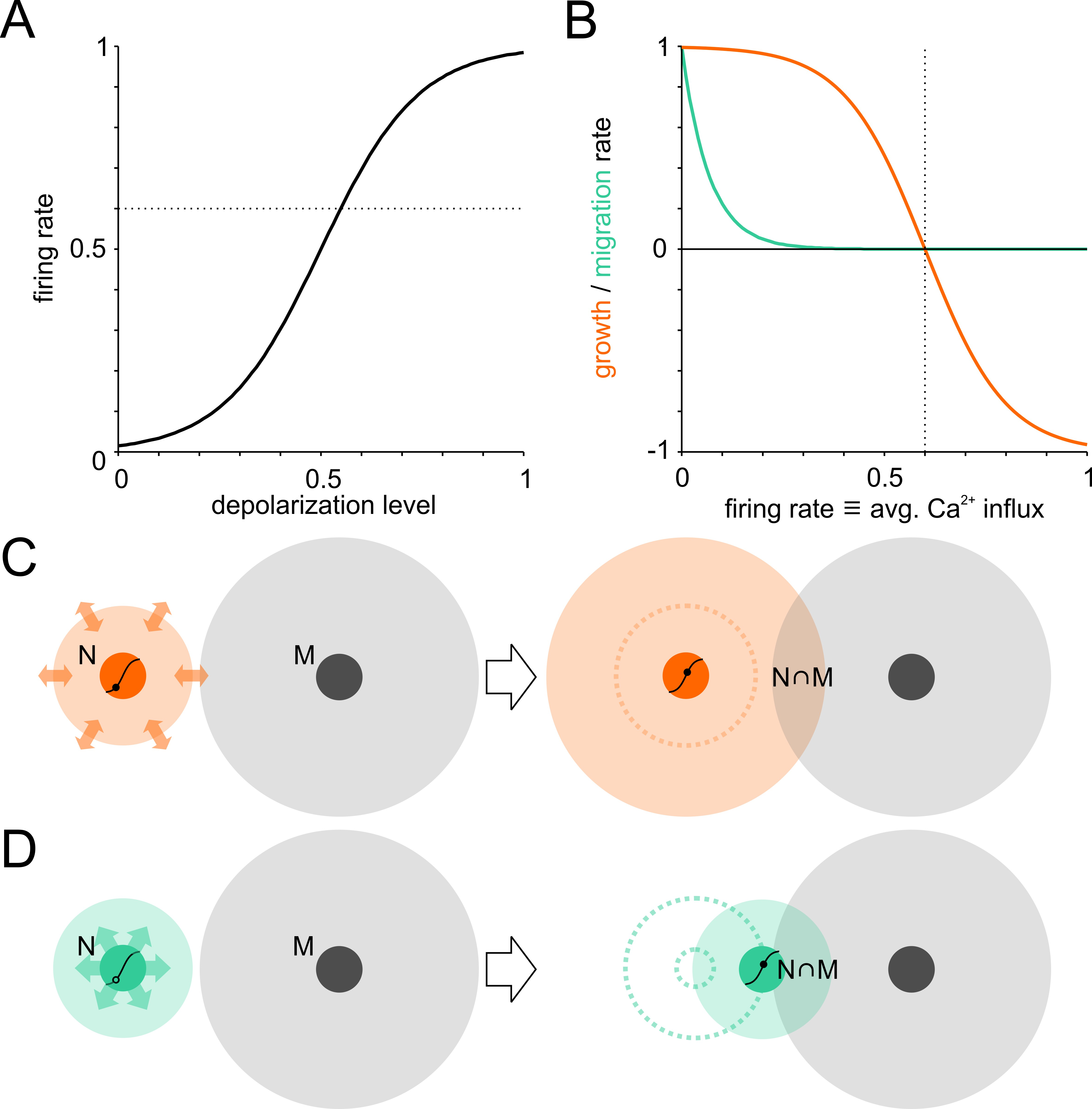 Self Organization Of Modular Network Architecture By Activity Dependent Neuronal Migration And Outgrowth Elife