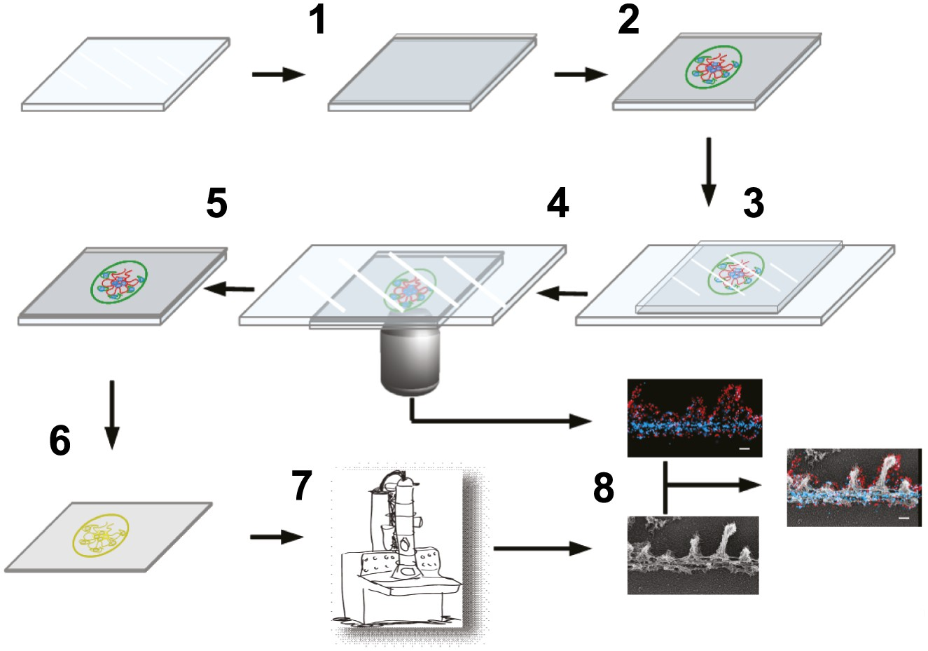 download Tissue Culture