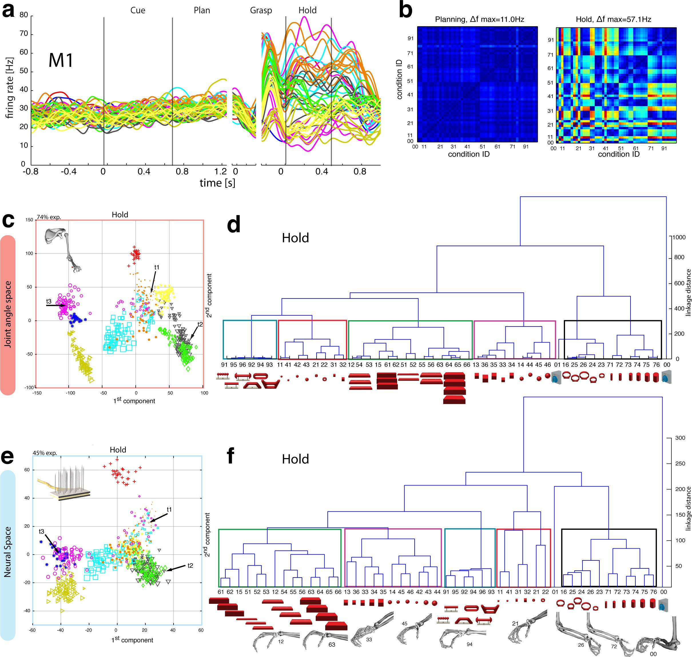 object vision to hand action in macaque parietal premotor and