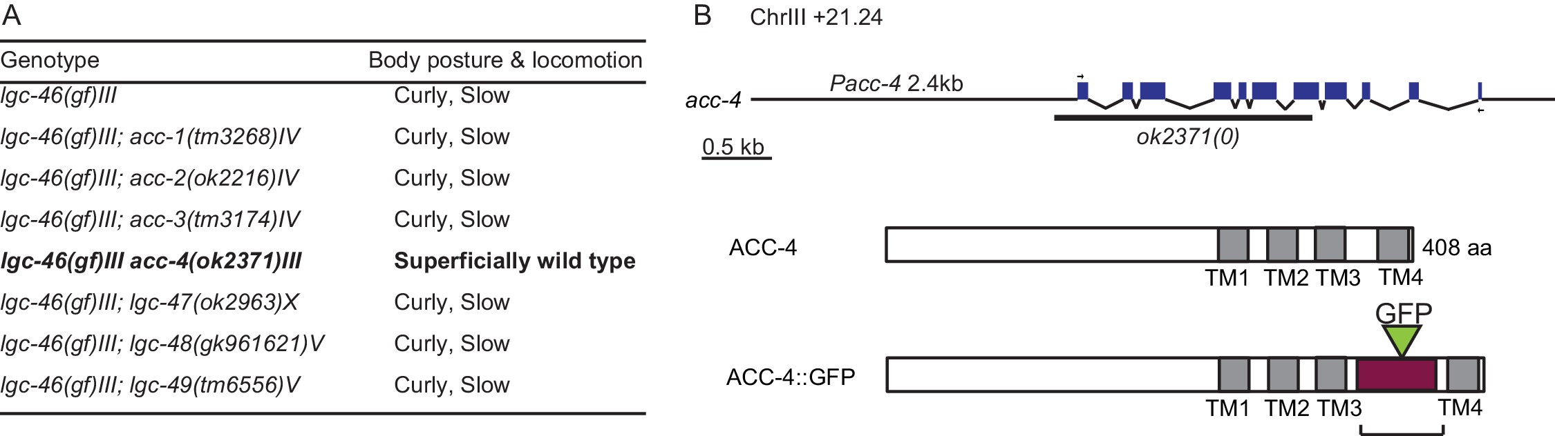 Release dependent feedback inhibition by a presynaptically download asset open asset nvjuhfo Image collections