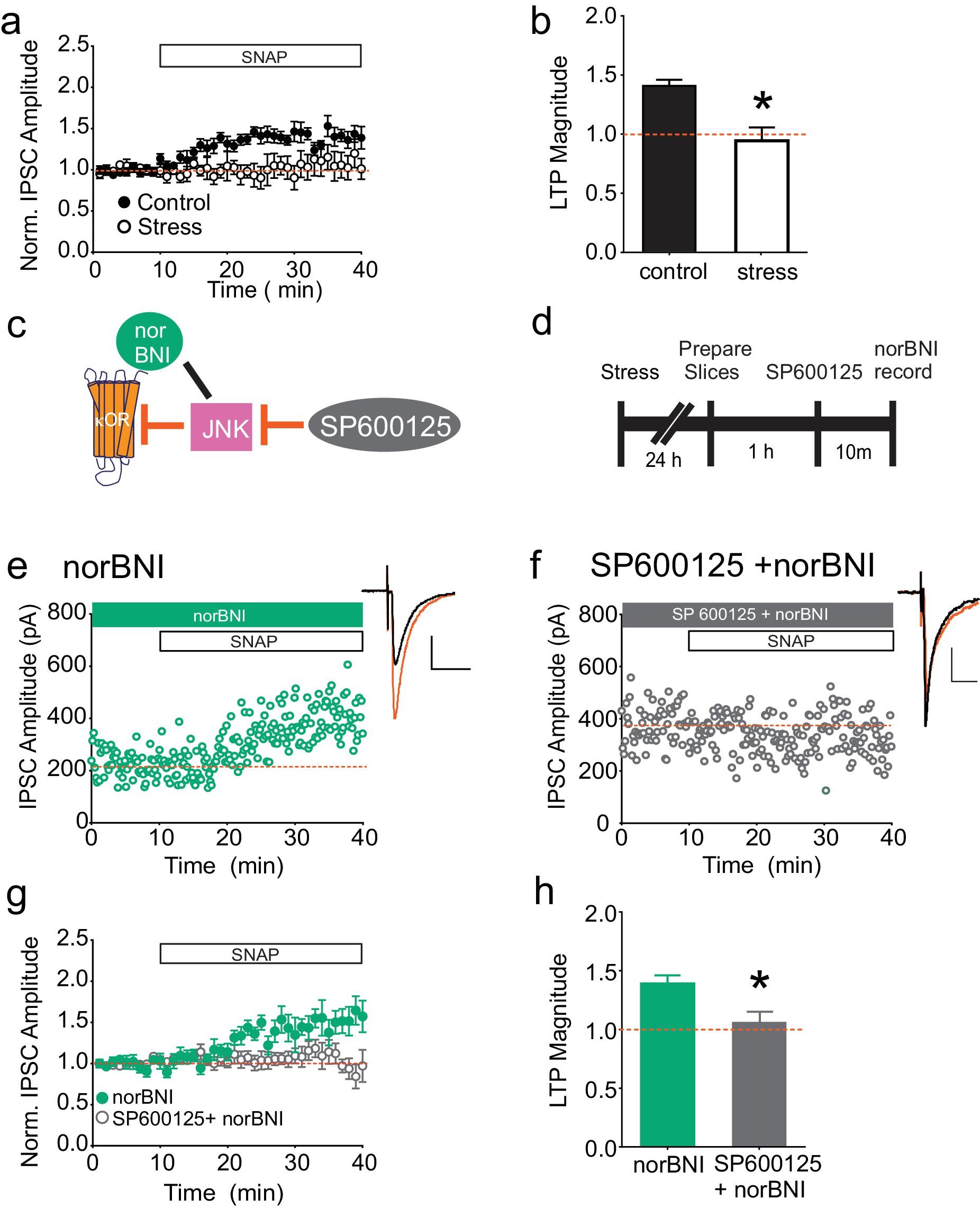 Constitutive activation of kappa opioid receptors at ventral – Knox Box 3b Wiring-diagram