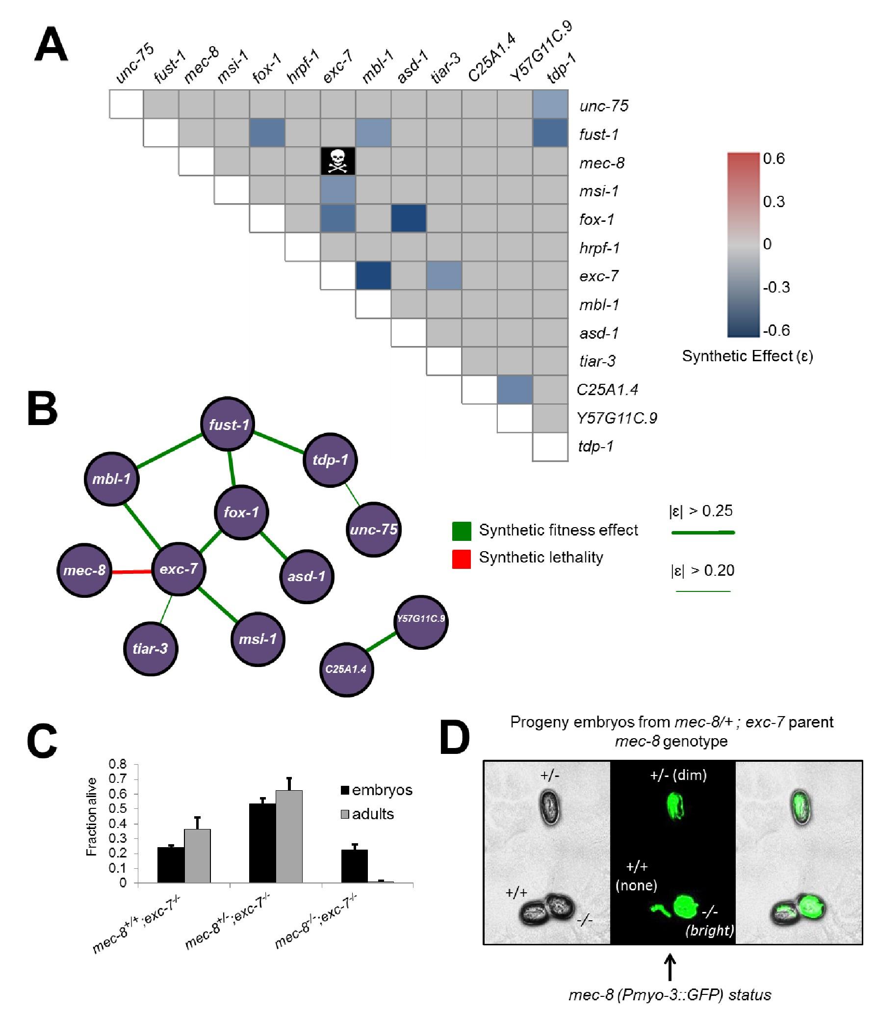 CRISPR-mediated Genetic Interaction Profiling Identifies