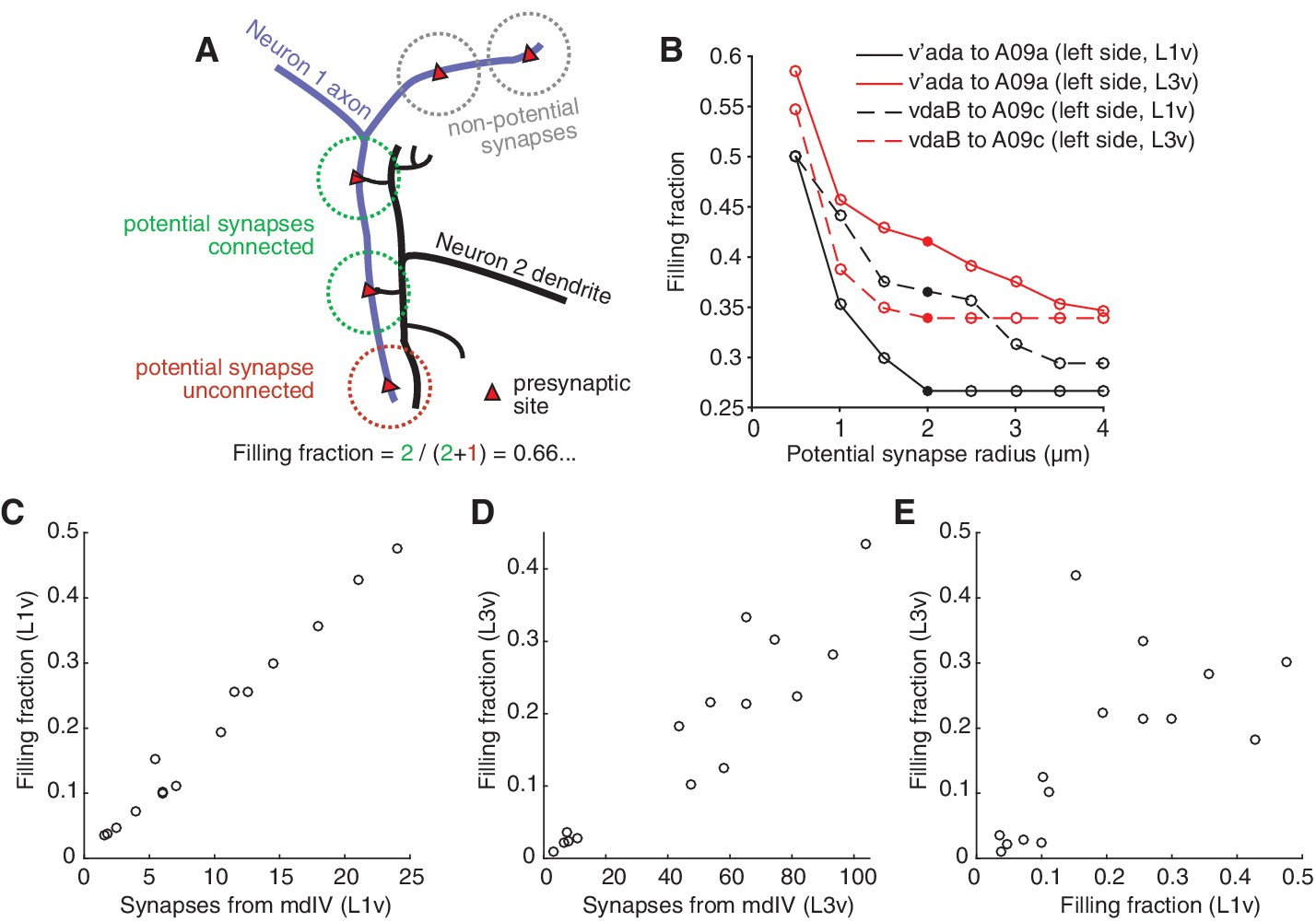 Conserved neural circuit structure across Drosophila larval ...