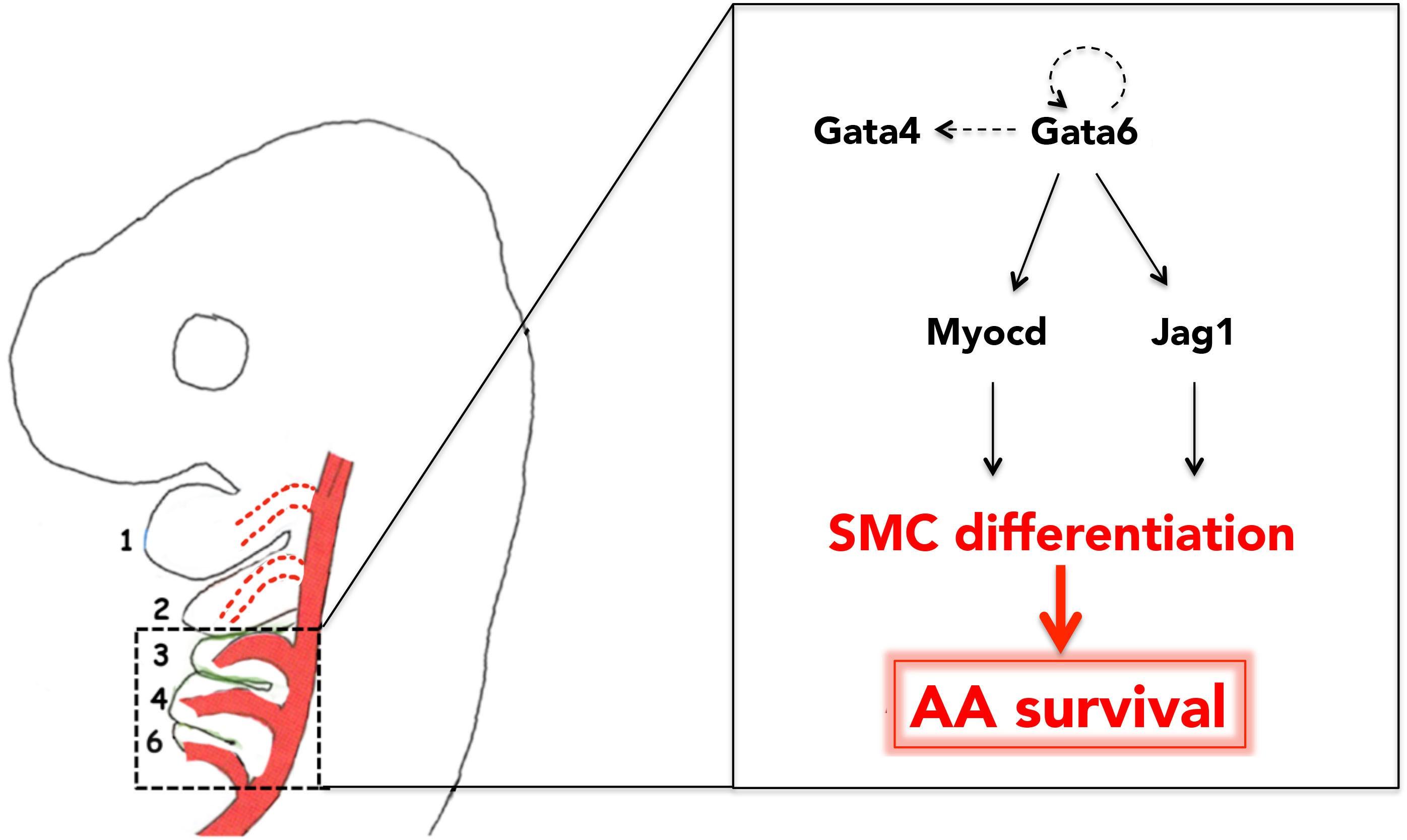 Ceiling Fan Smc Wiring Diagram. Ceiling Fan Electrical Diagram ...