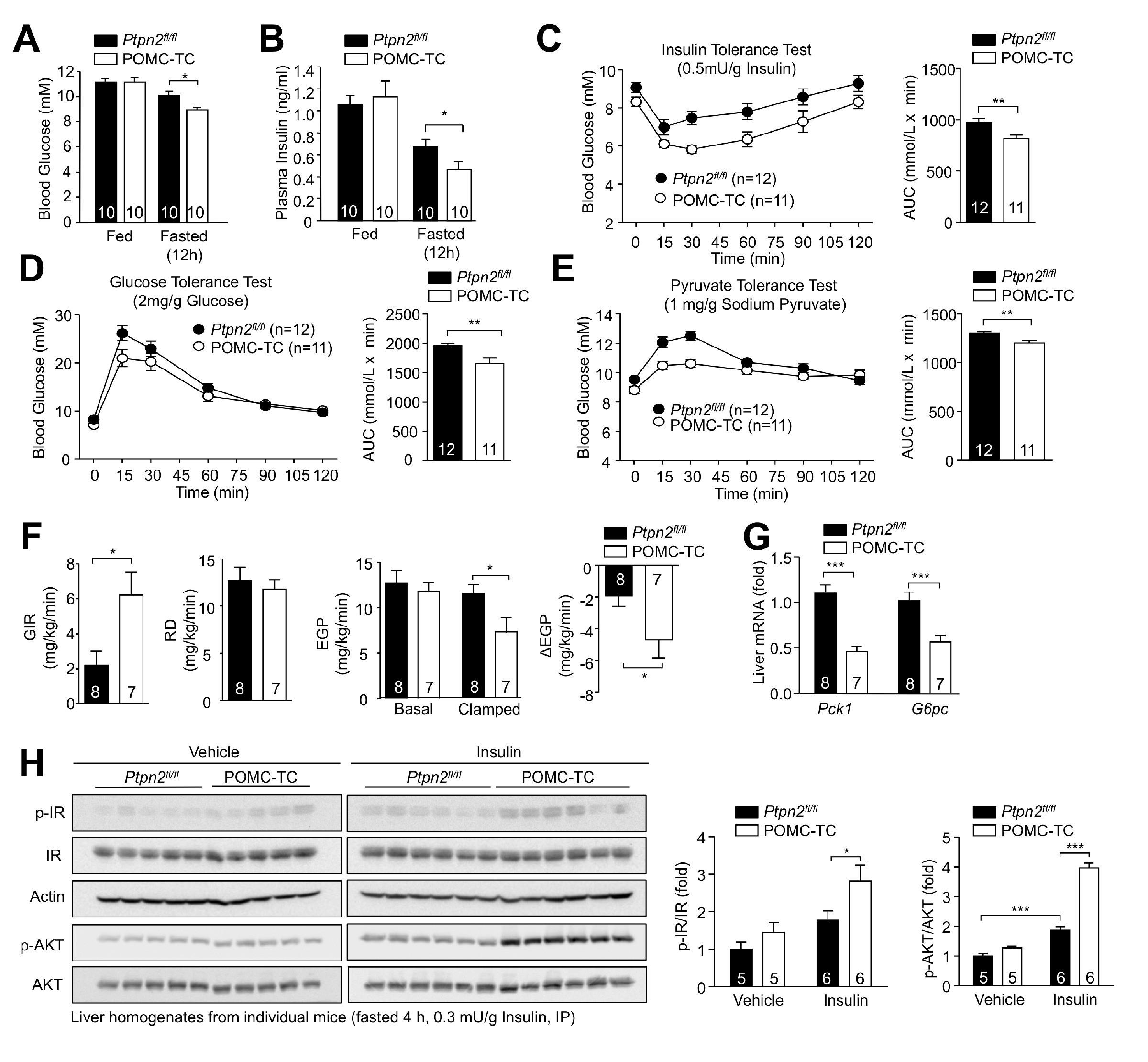 Insulin regulates POMC neuronal plasticity to control