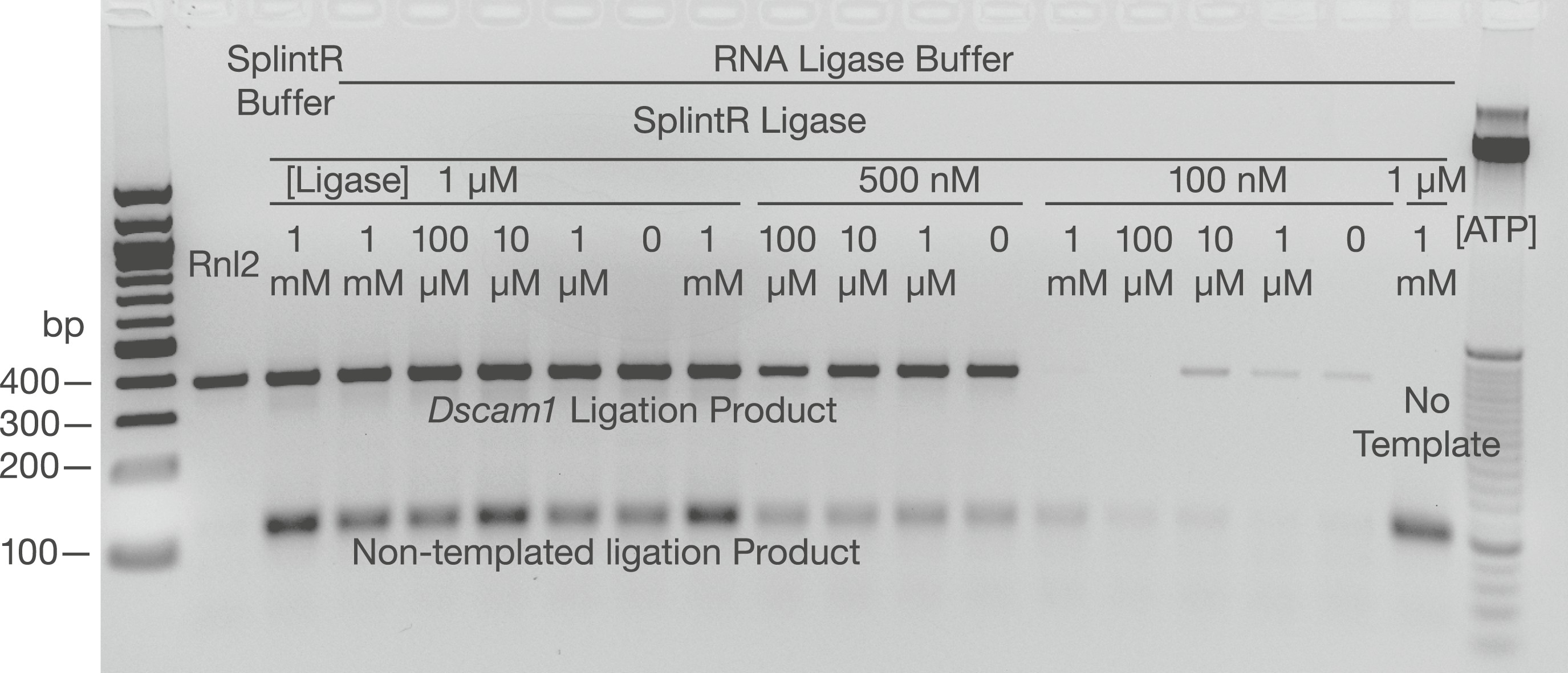 Assessing long-distance RNA sequence connectivity via RNA-templated ...