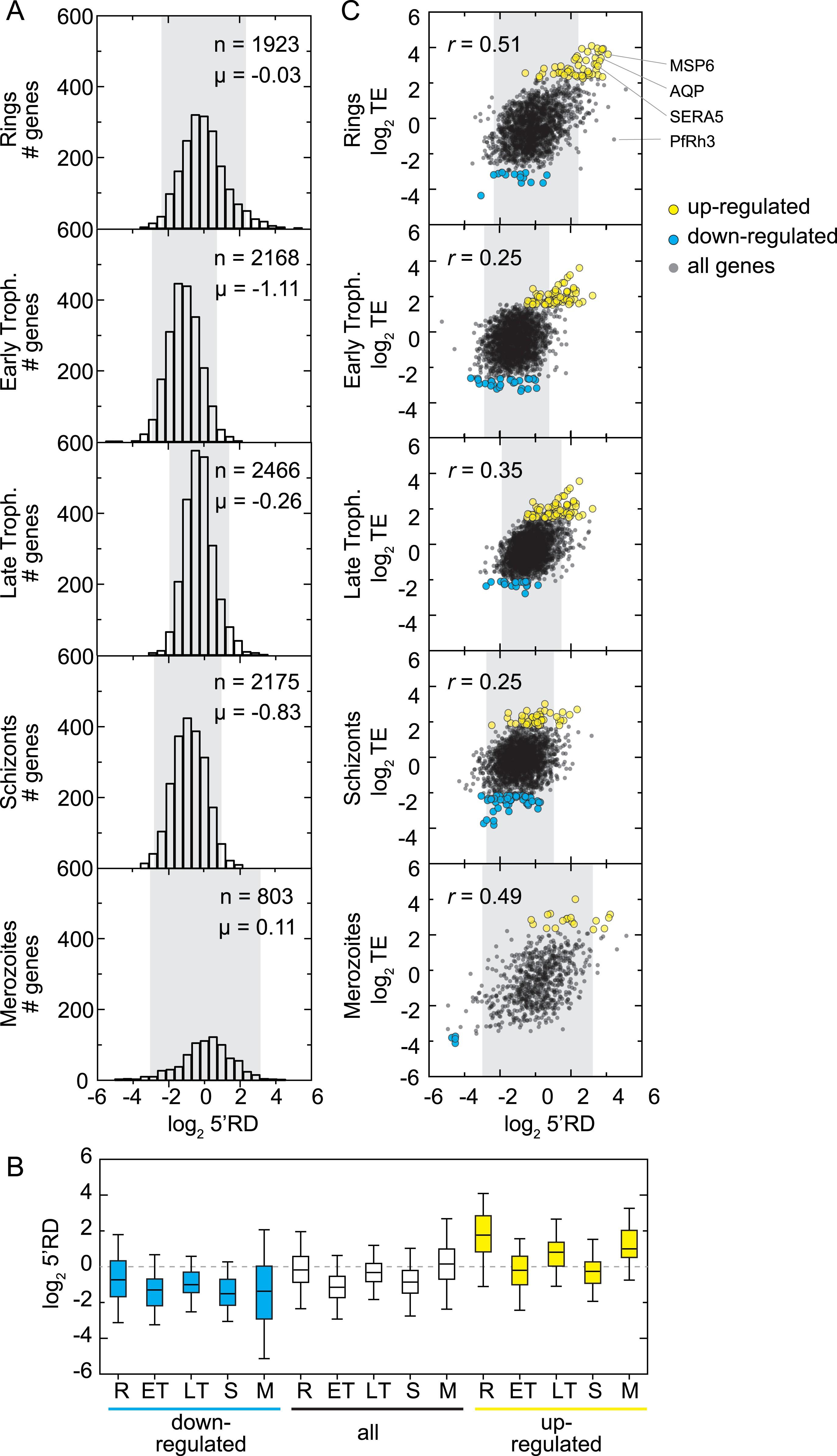 Genome wide regulatory dynamics of translation in the plasmodium download asset open asset falaconquin