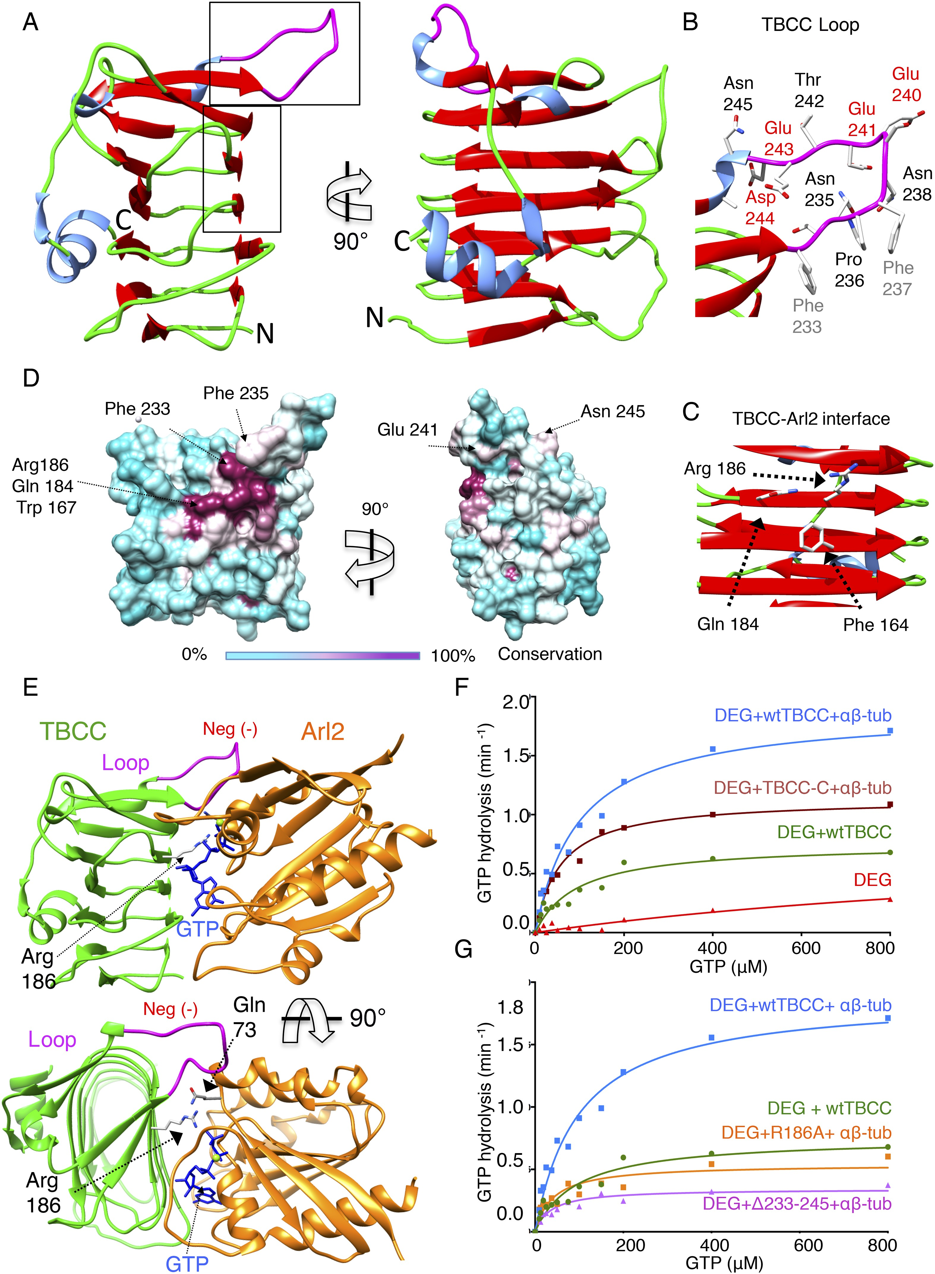 Figures and data in tubulin cofactors and arl2 are cage like download asset open asset buycottarizona Image collections