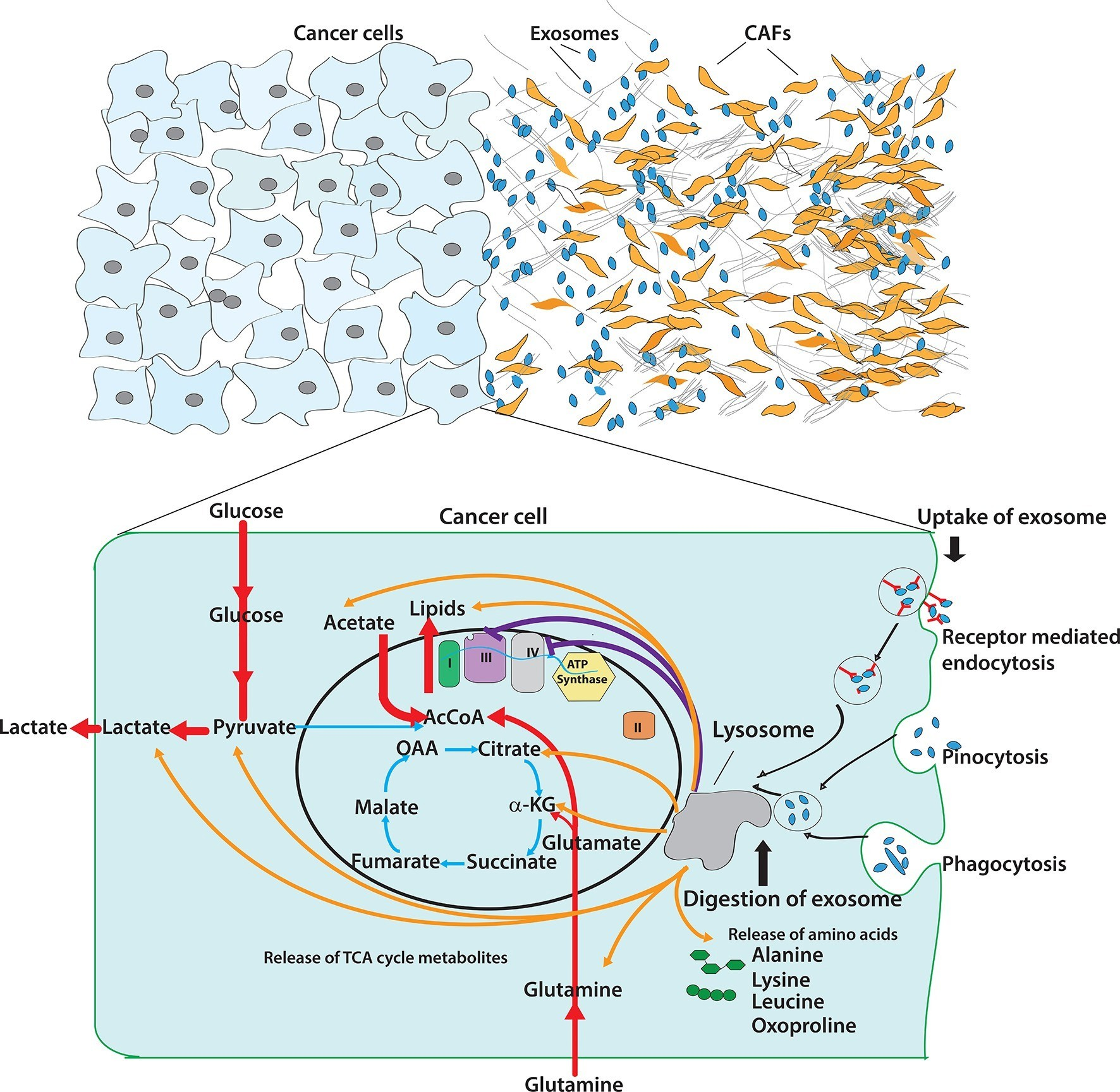 Figures and data in tumor microenvironment derived exosomes download asset open asset pooptronica Gallery