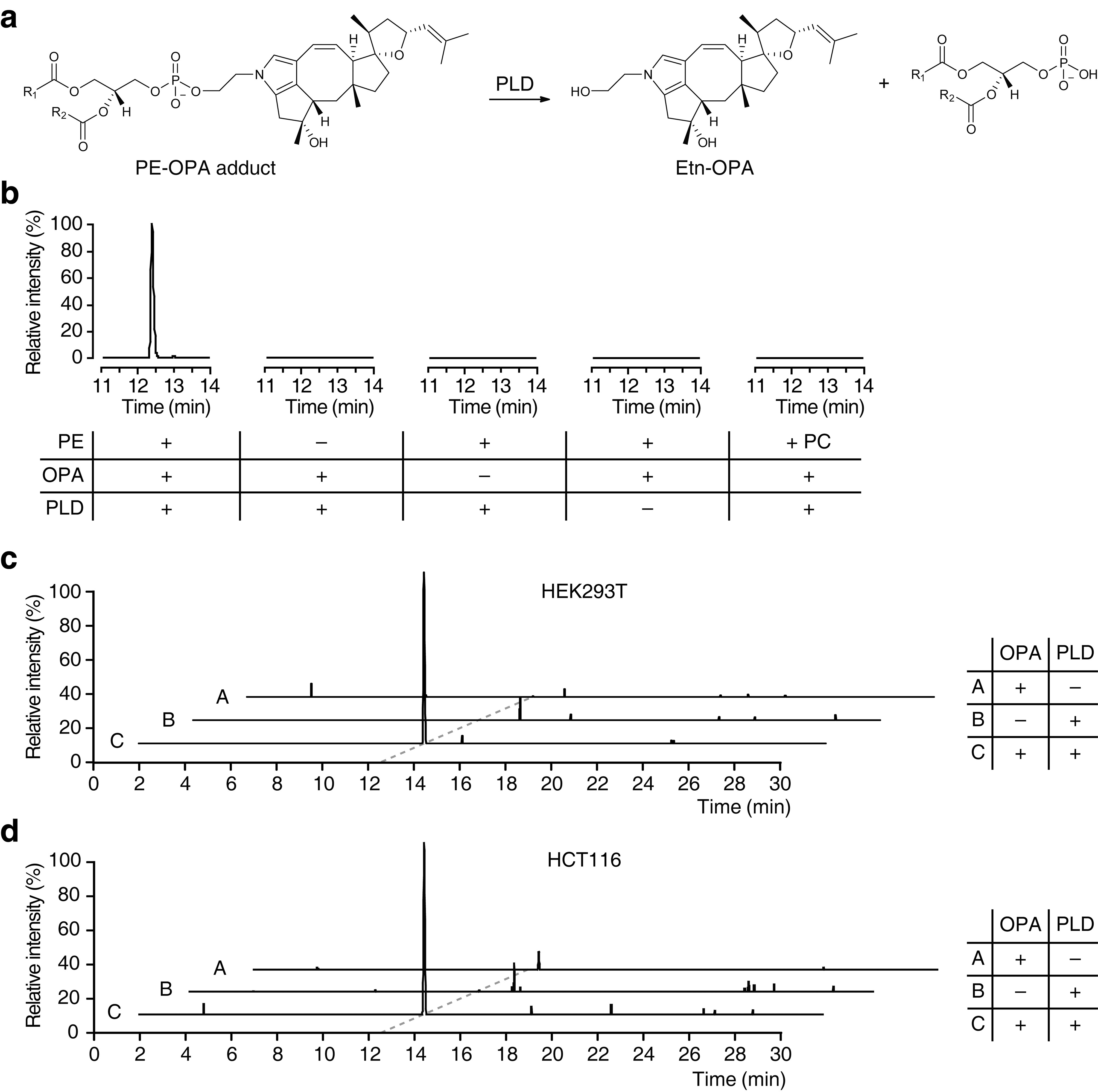 Figures and data in the anticancer natural product ophiobolin a download asset open asset falaconquin