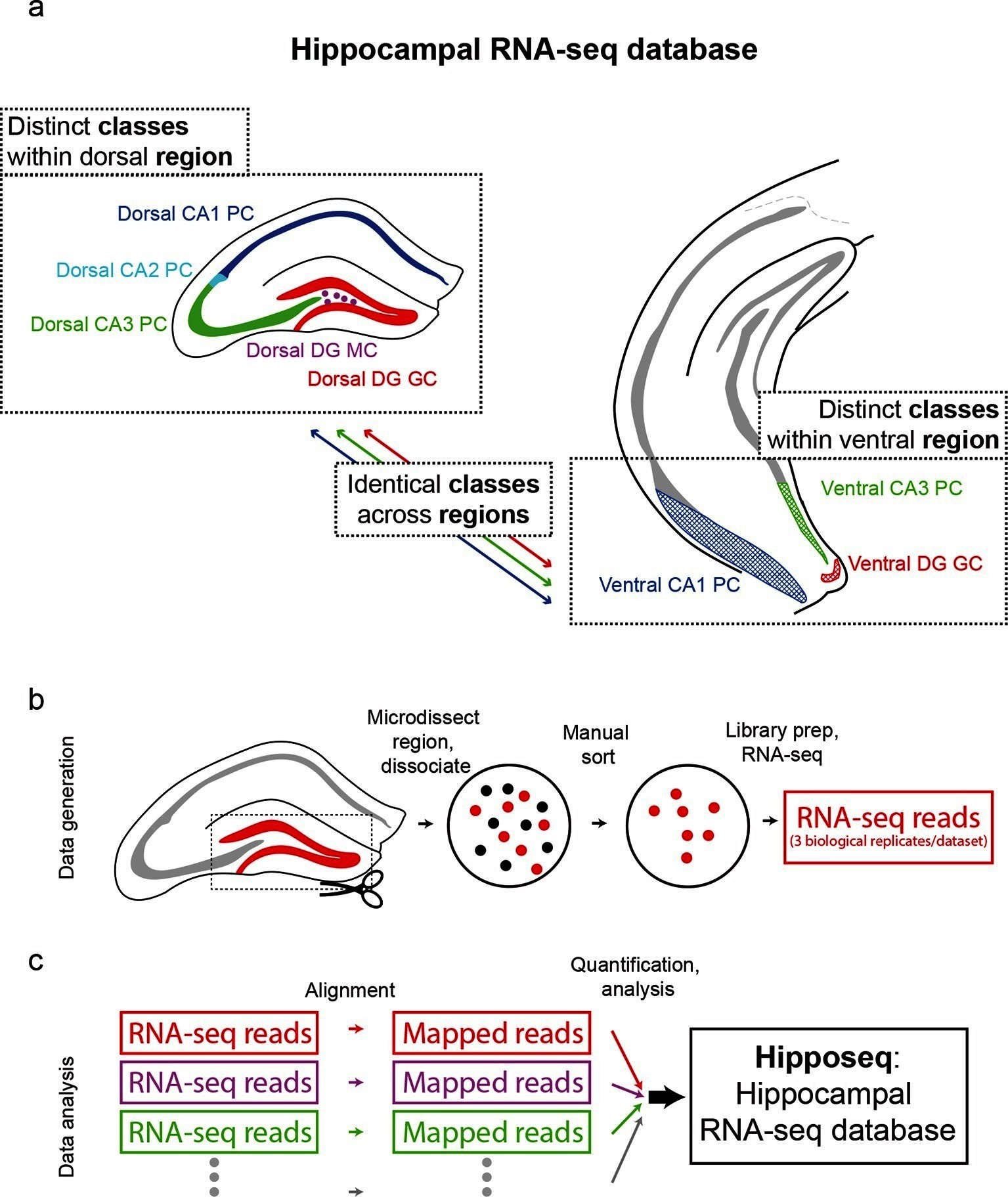 Hipposeq: a comprehensive RNA-seq database of gene expression in ...