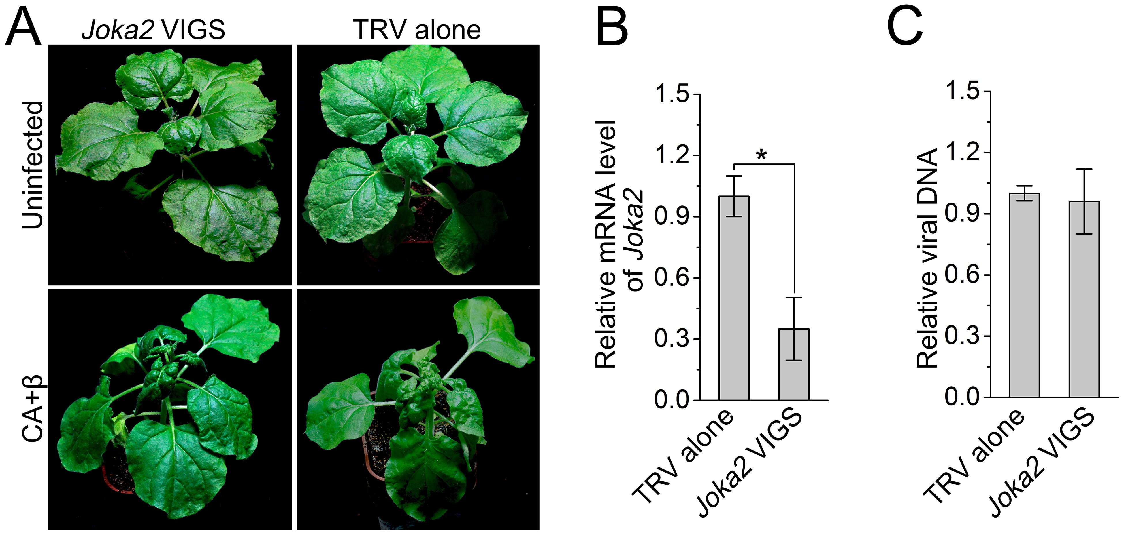 Autophagy functions as an antiviral mechanism against geminiviruses ...
