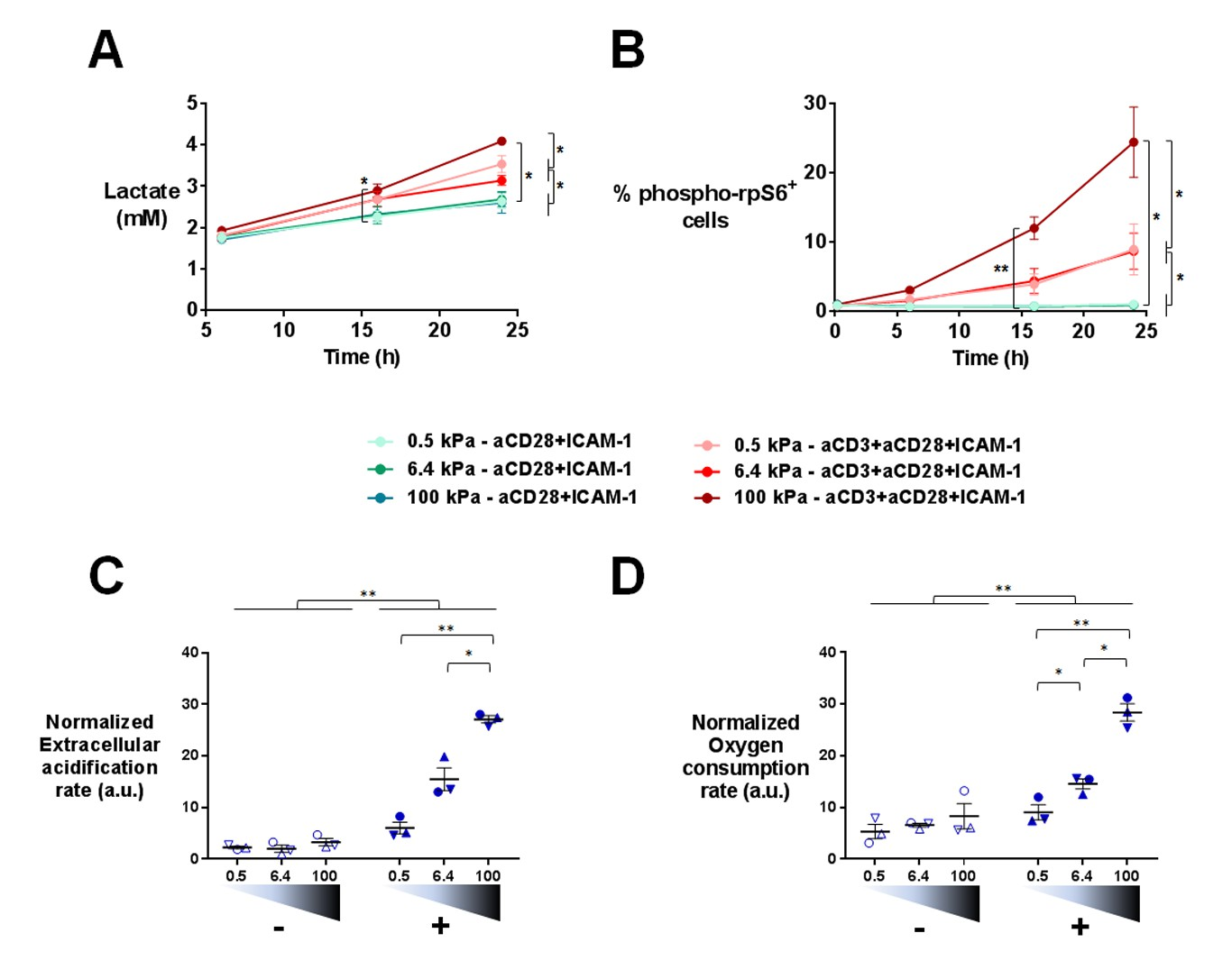 Different tcr induced t lymphocyte responses are potentiated by download asset open asset pooptronica Gallery