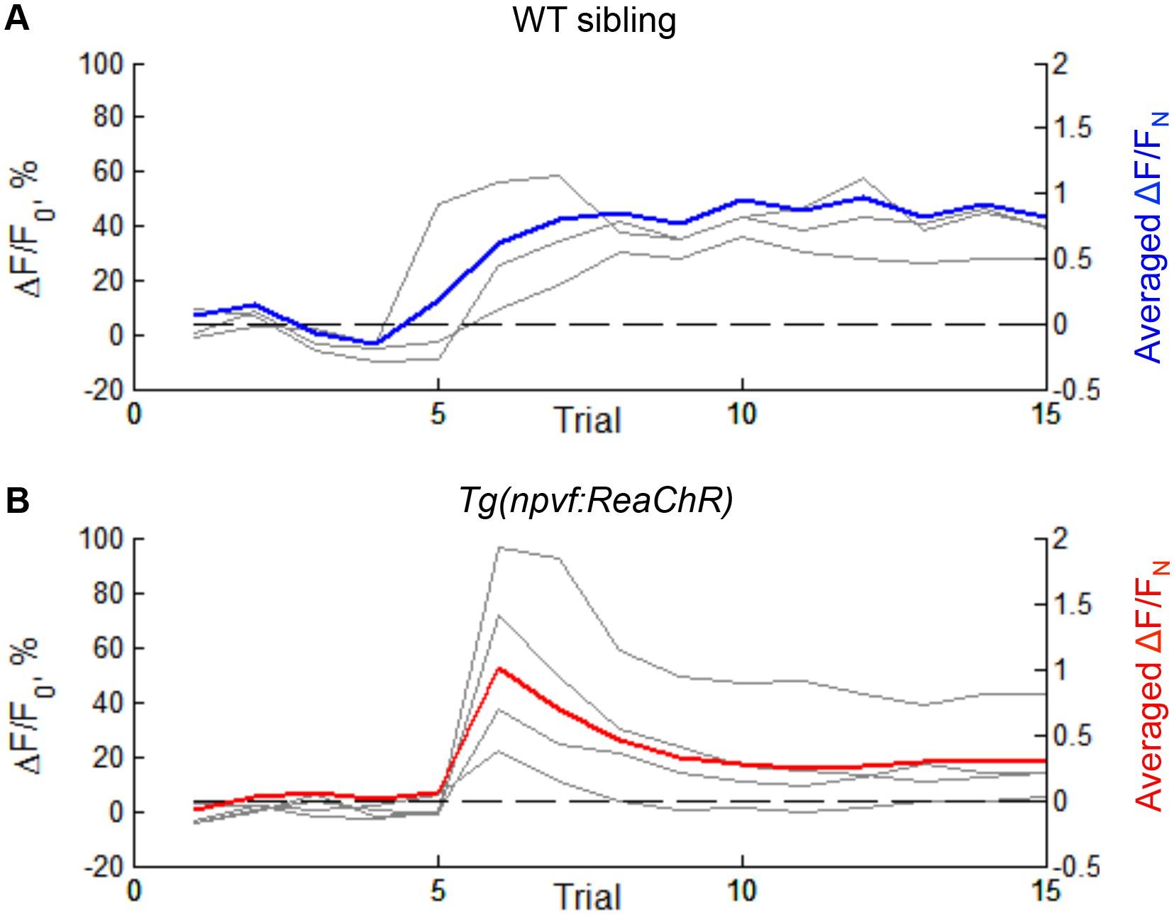 Genetic and neuronal regulation of sleep by neuropeptide VF | eLife