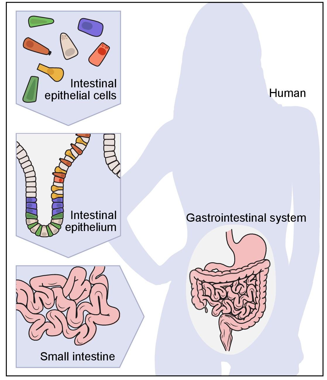 Charmant Anatomy And Physiology Revealed 2.0 Zeitgenössisch ...