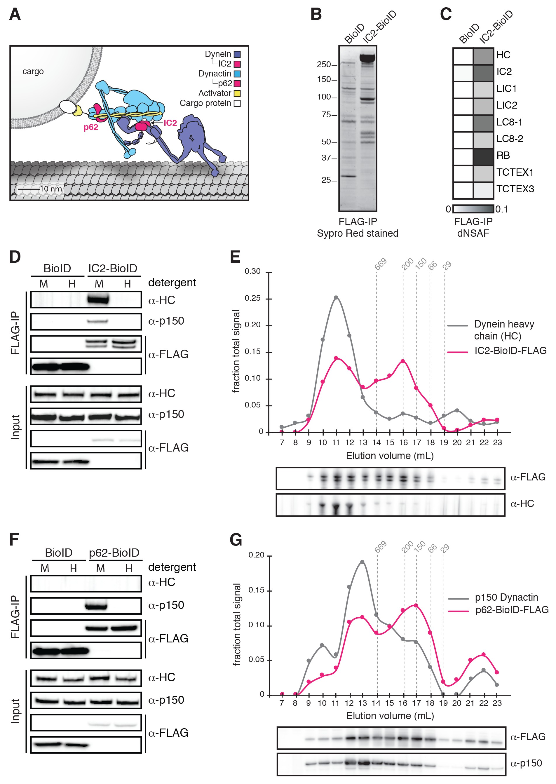The human cytoplasmic dynein interactome reveals novel activators of download asset open asset publicscrutiny Image collections
