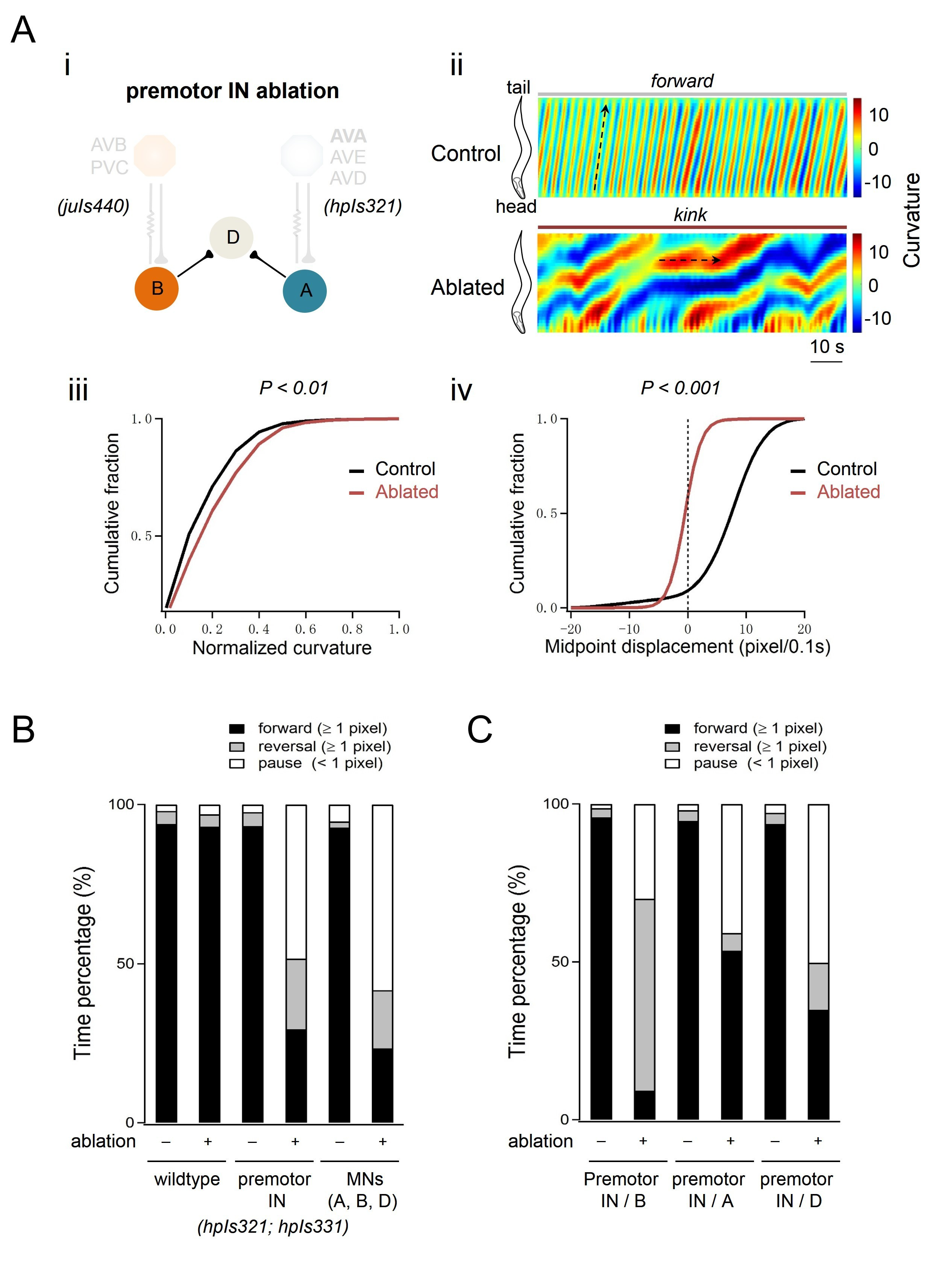 Excitatory motor neurons are local oscillators for backward ...