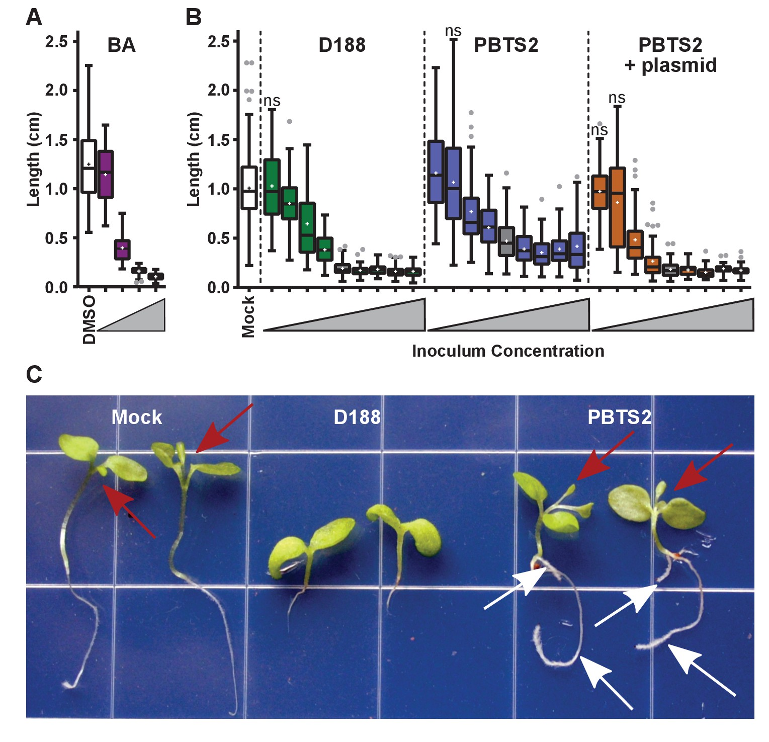 Evolutionary transitions between beneficial and phytopathogenic download asset open asset ccuart Images