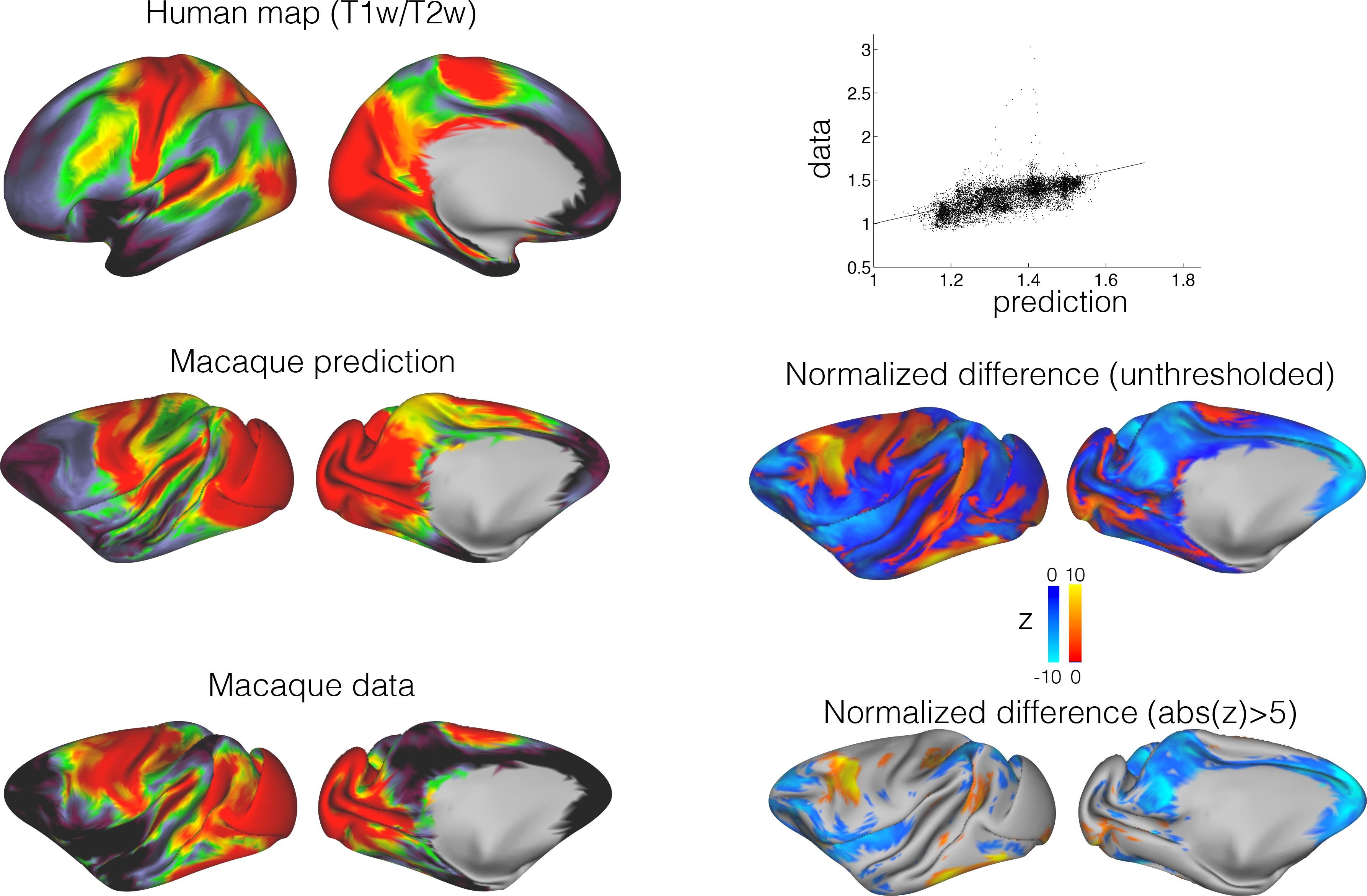 Contemporary Comparative Anatomy Of Brain Inspiration - Anatomy ...